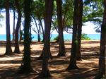 アイアンツリーの林