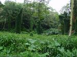 ジャングル2