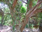 ココクレーター植物園9