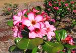 ココクレーター植物園10