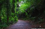 マノアのジャングル入り口