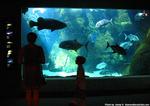 ワイキキ水族館8
