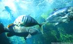 ワイキキ水族館9