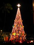 ホノルル・ハレのクリスマスツリー