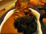 ブブちゃんと2匹の子犬