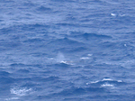 マカプウから見下ろすクジラ1