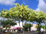 ホワイト&イエローシャワーツリー