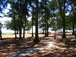 ワイマナロのアイアンツリーの林