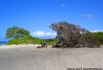 モクレイアビーチの木