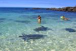 ラニアケアのウミガメ1