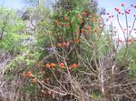 アフリカの花