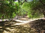 ココクレーター植物園2
