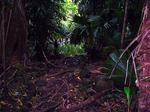 ジャングルのトレイル