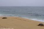 パパイロアビーチのウミガメ2